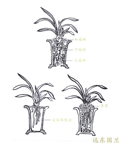 手绘兰花盆图片